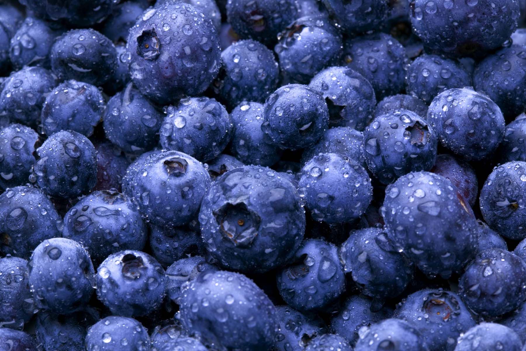Buy fresh Blueberry Online at Best Price - Farmbucket com